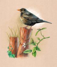 Blackbird On A Wood Pole