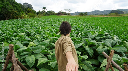 Cuadros en Lienzo  A Man Looking At A Tobacco Field In Vinale