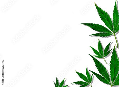 Creative cannabis leaves background. Minimal CBD concept. Flat lay.