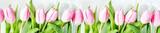 Fototapeta Tulips - Pink tulips flowers