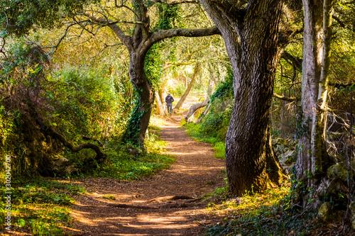 Canvas Prints Road in forest Camino sendero de bosque terrorífico