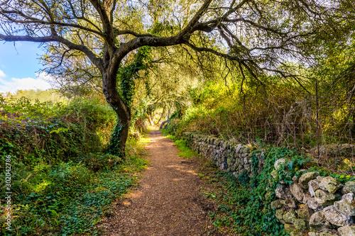 Árbol en camino del bosque frondoso