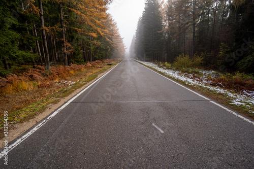 Fotografie, Obraz  Landschaft um den Titisee - Schwarzwald