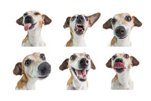 Collage Set Of 6 Dogs Portraits With Different Emotions. White Background. Funny Dog Face Expression