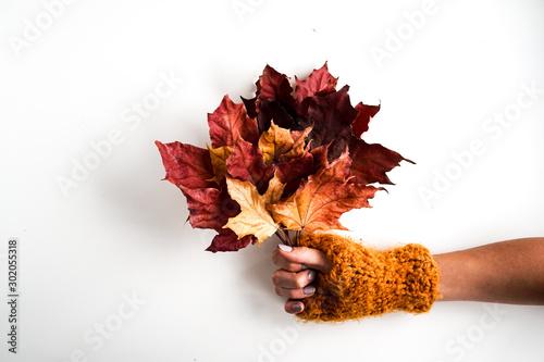 Obraz Bukiet kolorowych liści na białym tle. Dłoń w żółtej wełnianej rękawiczce trzymająca bukiet z liści. Minimalistyczne zdjęcie w przytulnym klimacie - fototapety do salonu