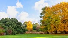 Autumn In British Park - Oster...
