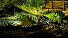 Iguane Vert Sieste