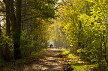 Autumn Walk In A Moor, An Area...