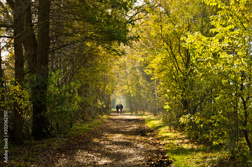 Autumn walk in a moor, an area of nature protection in Norderstedt, Germany Canvas Print
