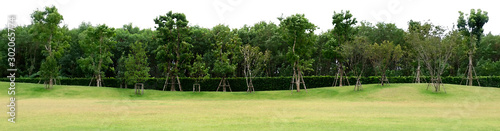 Obraz A large green lawn with forest in the background : illustration in classic brush style (jpeg) - fototapety do salonu