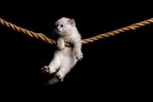 Cute Little White Kitten On A ...