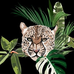 Fototapeta Pantera Graceful leopard and tropical leaves. Savana cat. Elegant poster, t-shirt composition, hand drawn style print. Black background.