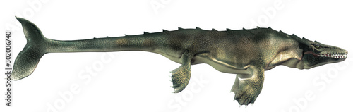 фотография An mosasaur shown in profile on a white background