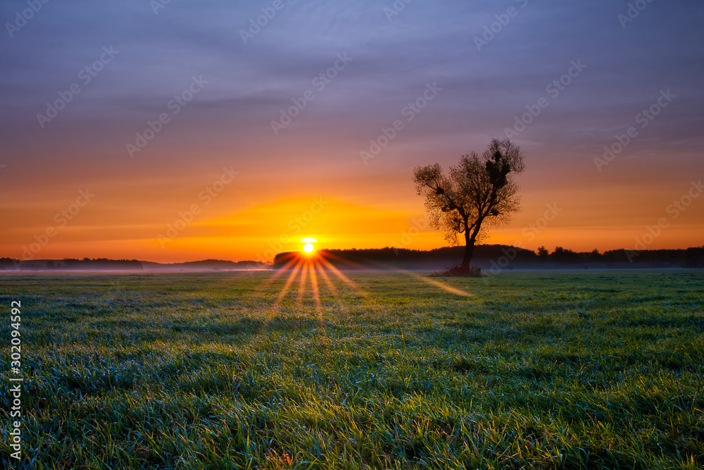 Fototapety, obrazy: Beautiful colorful and cold autumn sunrise at fields of grass