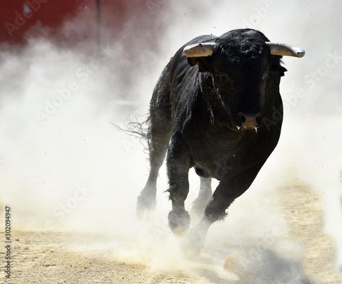 toro negro español en un espectaculo de toreo Wallpaper Mural