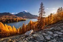 Herbst Am Silser See Mit Seinen Farbigen Lärchen Im Engadin In Der Schweiz