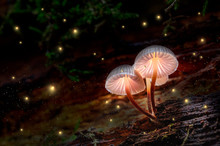 Glowing Mushrooms On Bark With Fireflies In Forest