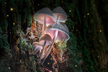 Glowing Violet Mushrooms On Bark In Dark Forest With Fireflies