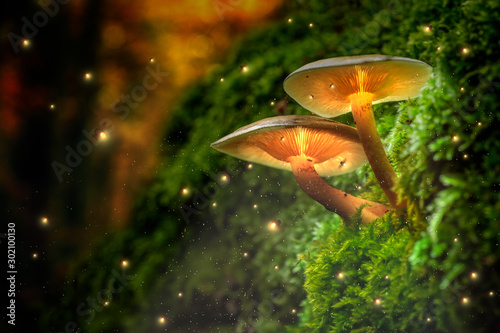 Fototapeta Glowing mushrooms on moss and fireflies in forest at dusk