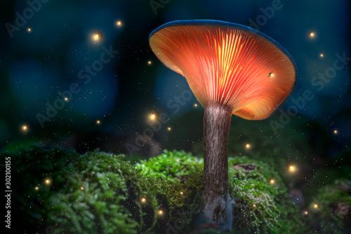 Glowing orange mushrooms on moss in dark forest with fireflies Wallpaper Mural