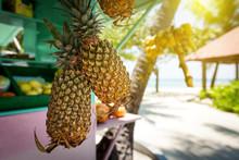 Fresh Ripe Pineapple Fruits Hanging On Sale