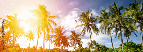Tropical wild park with coconut palm trees. Travel destinations