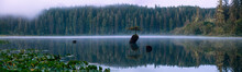 Panoramic View Of An Iconic Bonsai Tree At The Fairy Lake During A Misty Summer Sunrise. Taken Near Port Renfrew, Vancouver Island, British Columbia, Canada.