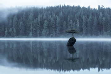 Panel Szklany Optyczne powiększenie Port Renfrew, Vancouver Island, British Columbia, Canada. View of an Iconic Bonsai Tree at the Fairy Lake during a misty summer sunrise. Artistic Render