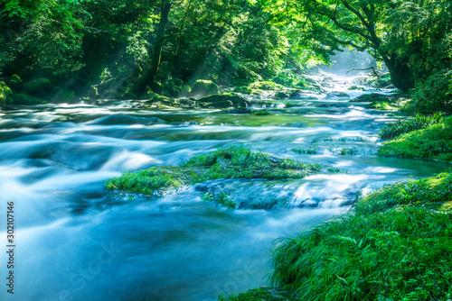 Canvas Prints Forest river 菊池渓谷