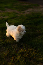 Small Dog In Grass