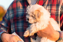 Small Dog Being Held