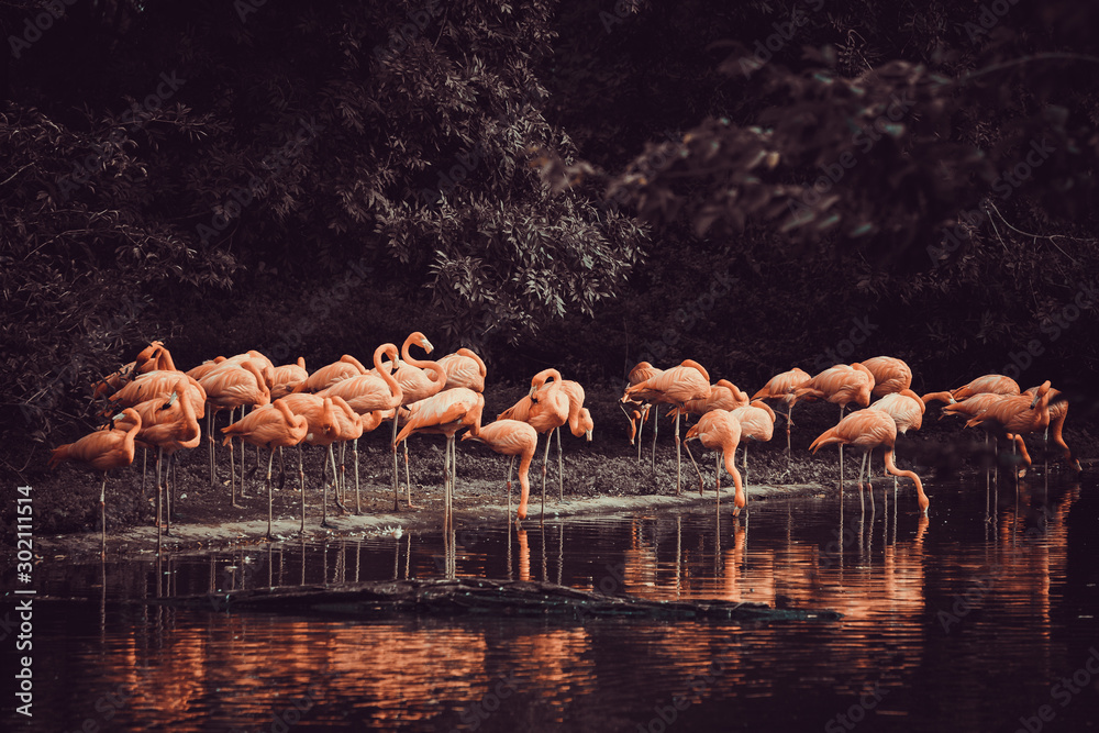flamingo standing in water with reflection <span>plik: #302111514 | autor: EwaStudio</span>