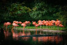Flamingo Standing In Water Wit...