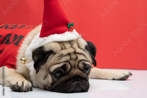 Foto  Bored Adorable Pug wearing santa hat and chrisymas costume in feeling so sad chr