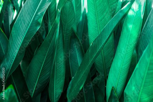 Keuken foto achterwand Texturen green leaf texture, dark green foliage nature background, tropical leaf