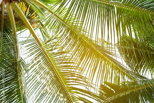 Foto auf AluDibond Palms tropical palm leaf background, coconut palm trees perspective view