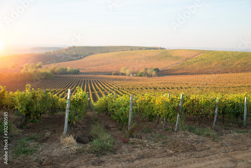 Fotografiet Beautiful landscape of Vineyards in Tuscany