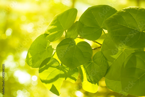 Foto auf Leinwand Gelb Closeup nature view of green leaf on blurred greenery background at morning sunlight with copy space using as background natural green plants landscape, fresh wallpaper concept.