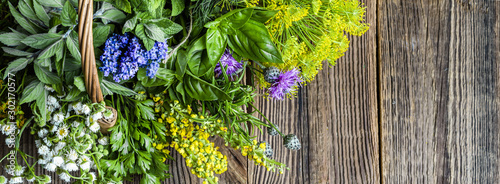 Obraz Fresh herbs from the garden on wooden table. Mix of herb on wood. - fototapety do salonu