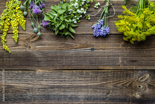 Assorted herbs from the garden on wooden table Canvas Print