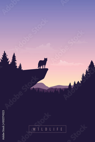 Obraz wolf on a cliff wildlife forest at sunset vector illustration EPS10 - fototapety do salonu