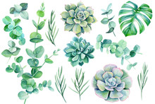 Set Of Green Leaves And Branches On A White Background Tropical Plants, Watercolor Illustration, Botanical Painting Eucalyptus, Lavender, Monstera, Succulent Echeveria