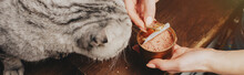 Panoramic Shot Of Young Woman Giving Scottish Fold Cat Pet Food In Can
