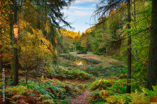 The Tarn in Morralee Wood at Allen Banks, and Staward Gorge in the English count Canvas Print