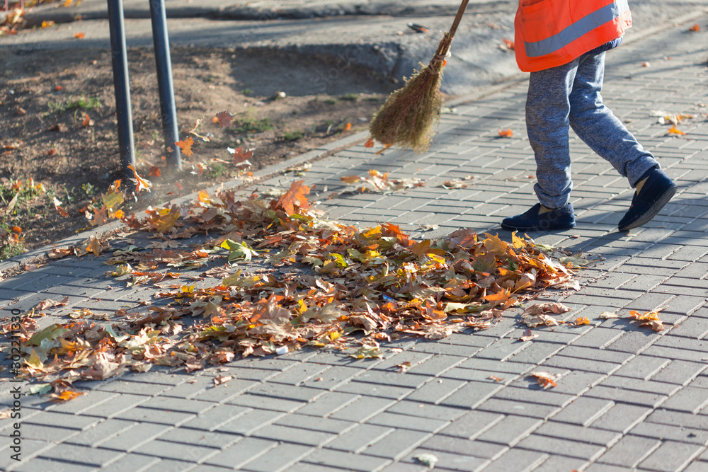 Fototapeta A cleaning lady cleans the dead side of the maple leaves from the sidewalk.