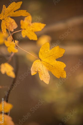 Jesienny pomarańczowy liść na drzewie - fototapety na wymiar