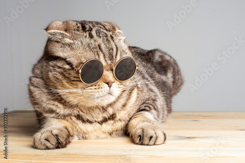 Valokuva Harsh cat (Scottish Fold) in round dark glasses rests on a wooden table