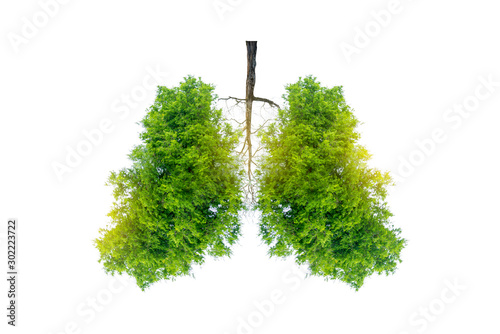 Lung green tree-shaped images, medical concepts, autopsy, 3D display and animals Wallpaper Mural