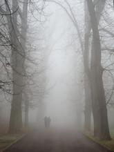 Fog In The Park Of The City Of...