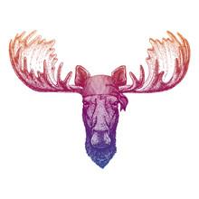 Moose Elk. Wild Pirate Or Biker. Vector Animal Portrait. Sailor, Motorcyclist. Print For Children Clothing, Tee. Kids Fashion.
